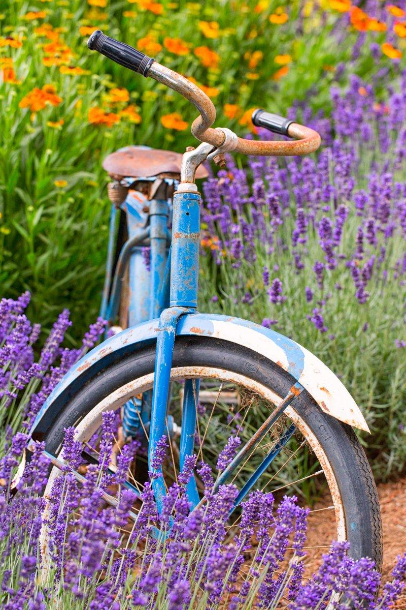 vintage bike in flowers