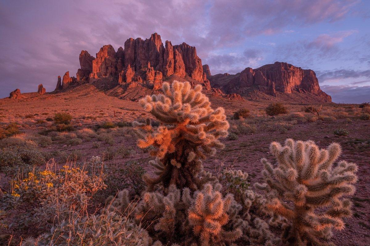 cactus and Mountain View in Arizona
